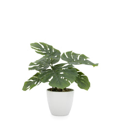 crown and birch faux potted monstera plant torre and tagus front