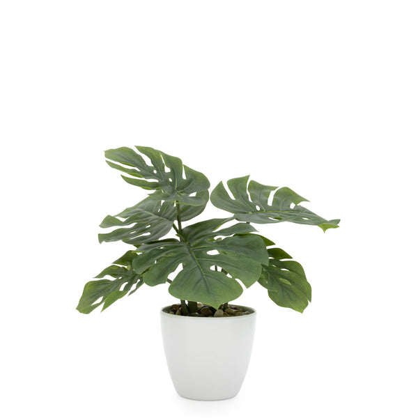 crown and birch monstera faux plant front