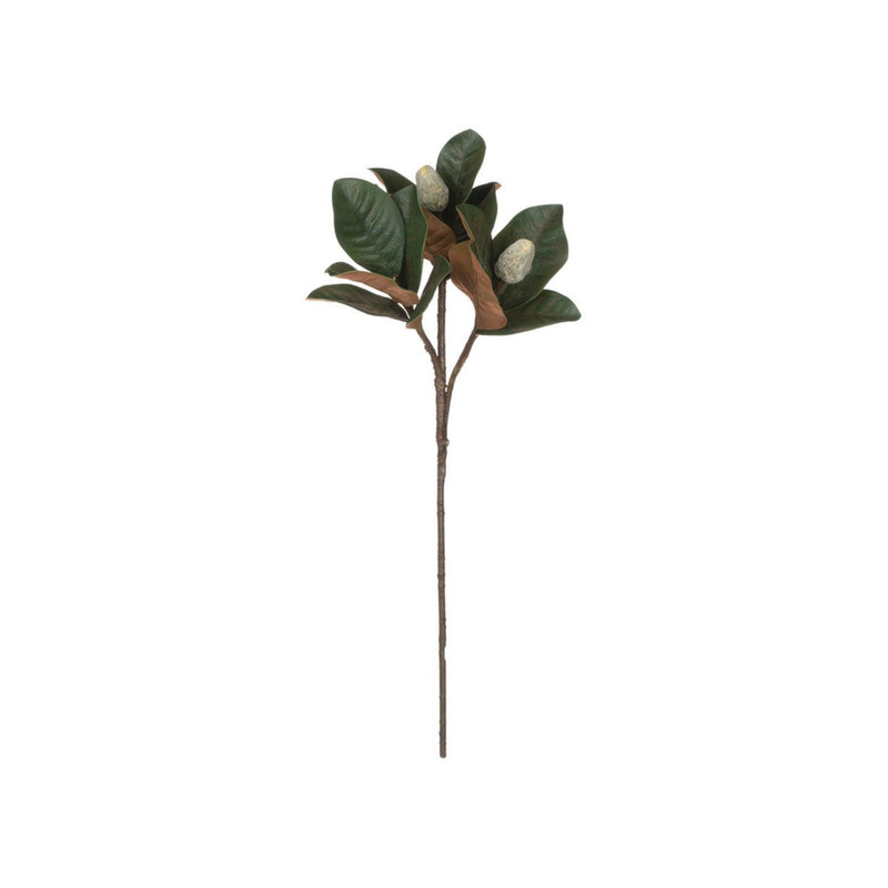 crown and birch magnolia leaf stem with buds front