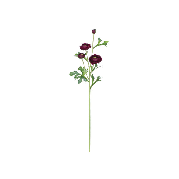 crown and birch ranunculus stem merlot front