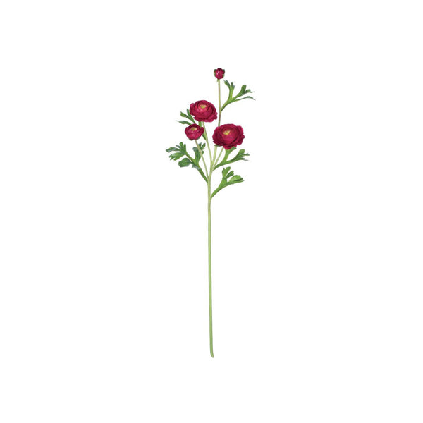 crown and birch ranunculus stem red front