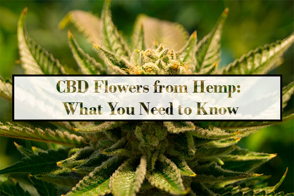 CBD Flowers from Hemp: What You Need to Know