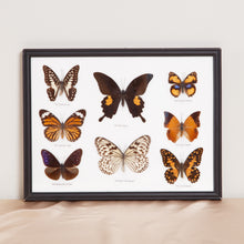 Load image into Gallery viewer, Wall Hanging Butterfly Collection