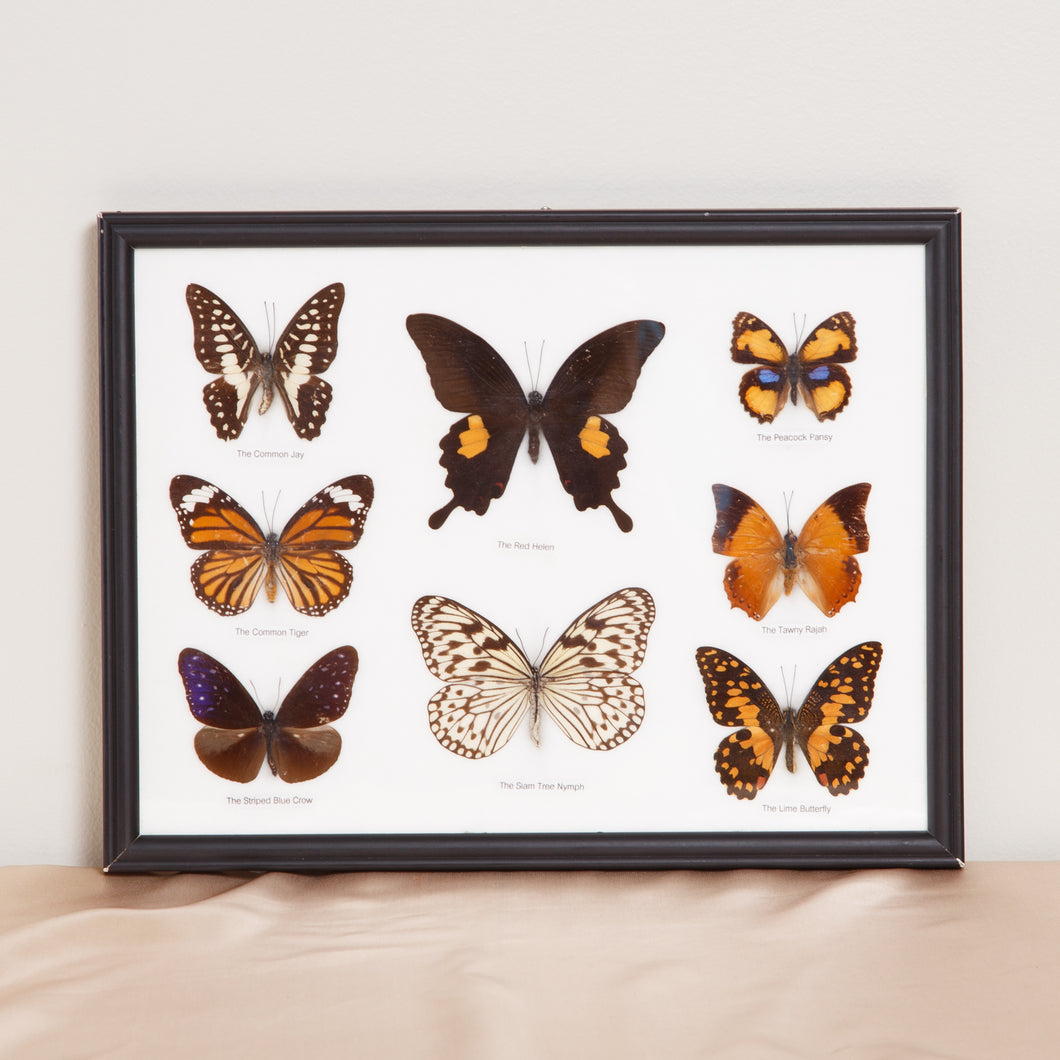 Wall Hanging Butterfly Collection