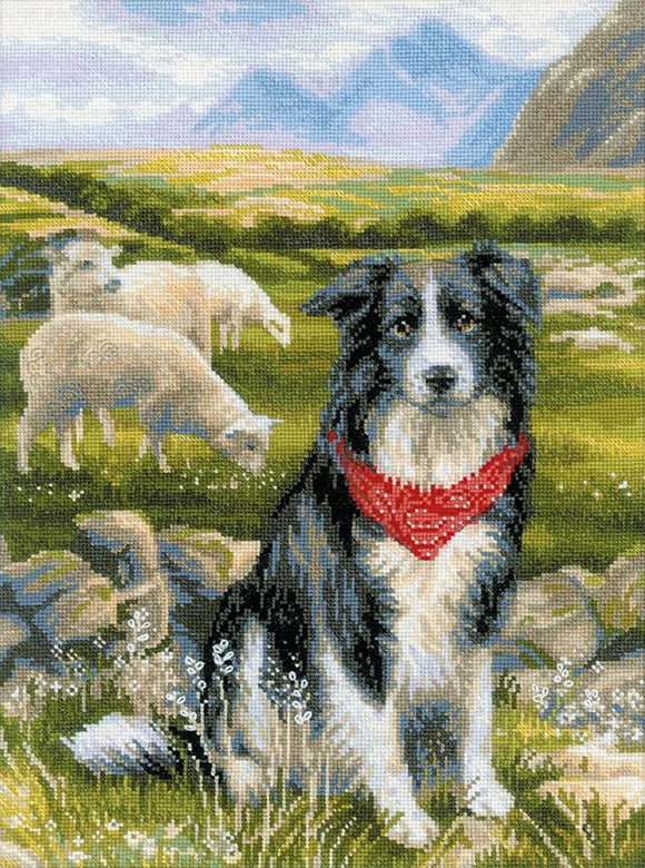 Border Collie Cross Stitch Kit, Riolis R1767