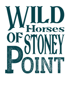 Wild Horses Of Stoney Point