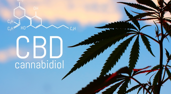 How to Decide Which CBD Oil is Right for You