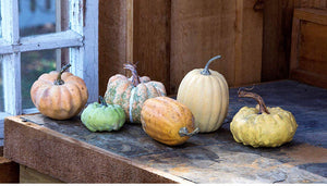 Set of 6 Mini Pumpkins