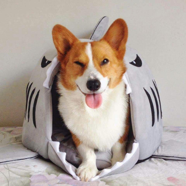 Best Selling Shark Pet Bed S / Gray Pets trendpicky