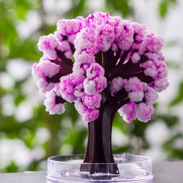 Magic Cherry Blossom Tree Gift trendpicky