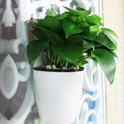 Self Watering Hanging Basket Planter trendpicky