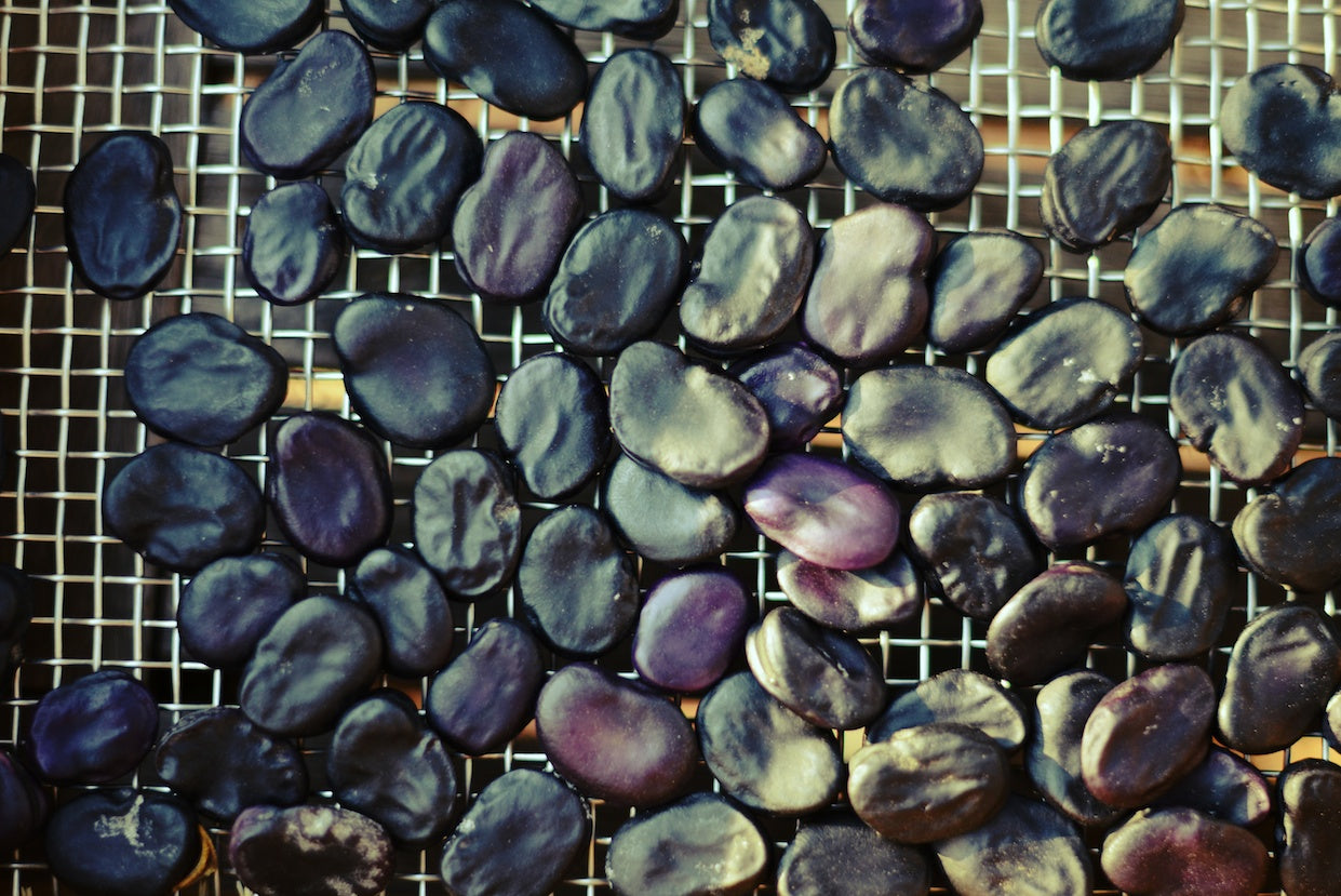 Purple Fava Negreta Bean Seeds on Screen