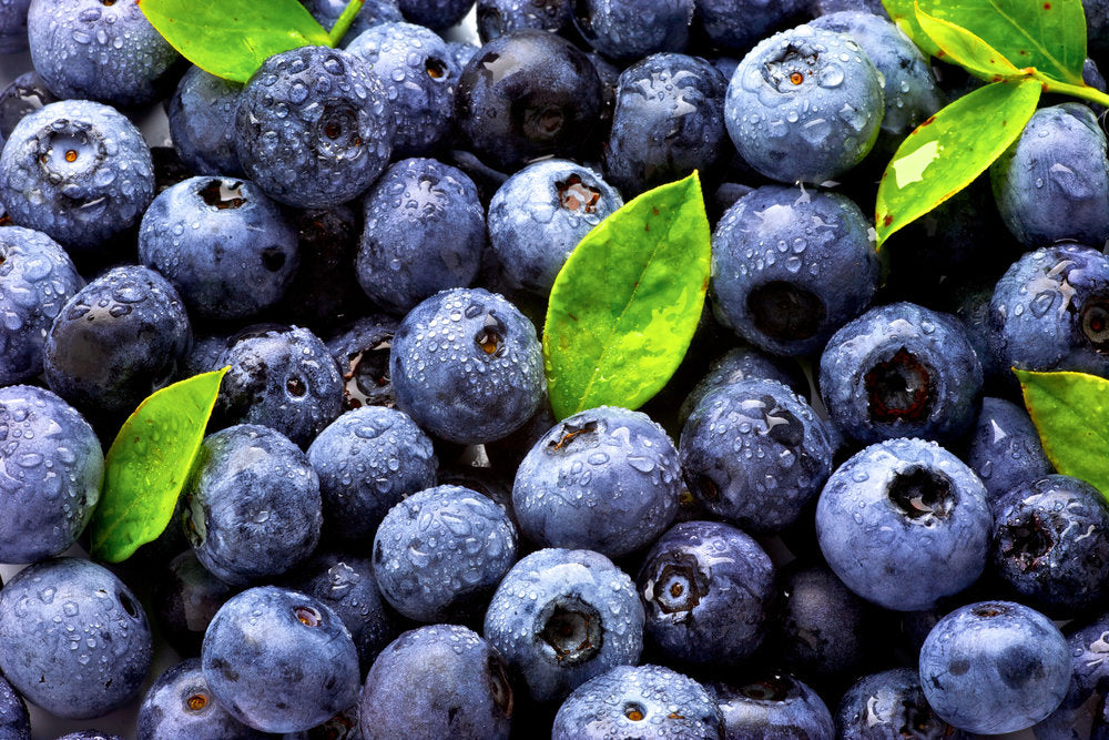 Antioxidant! Antioxidant! (aka. Free Radical Scavengers) Why is it getting so much buzz?