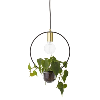 Gold And Glass 'Living' Pendant Light - Five And Dime