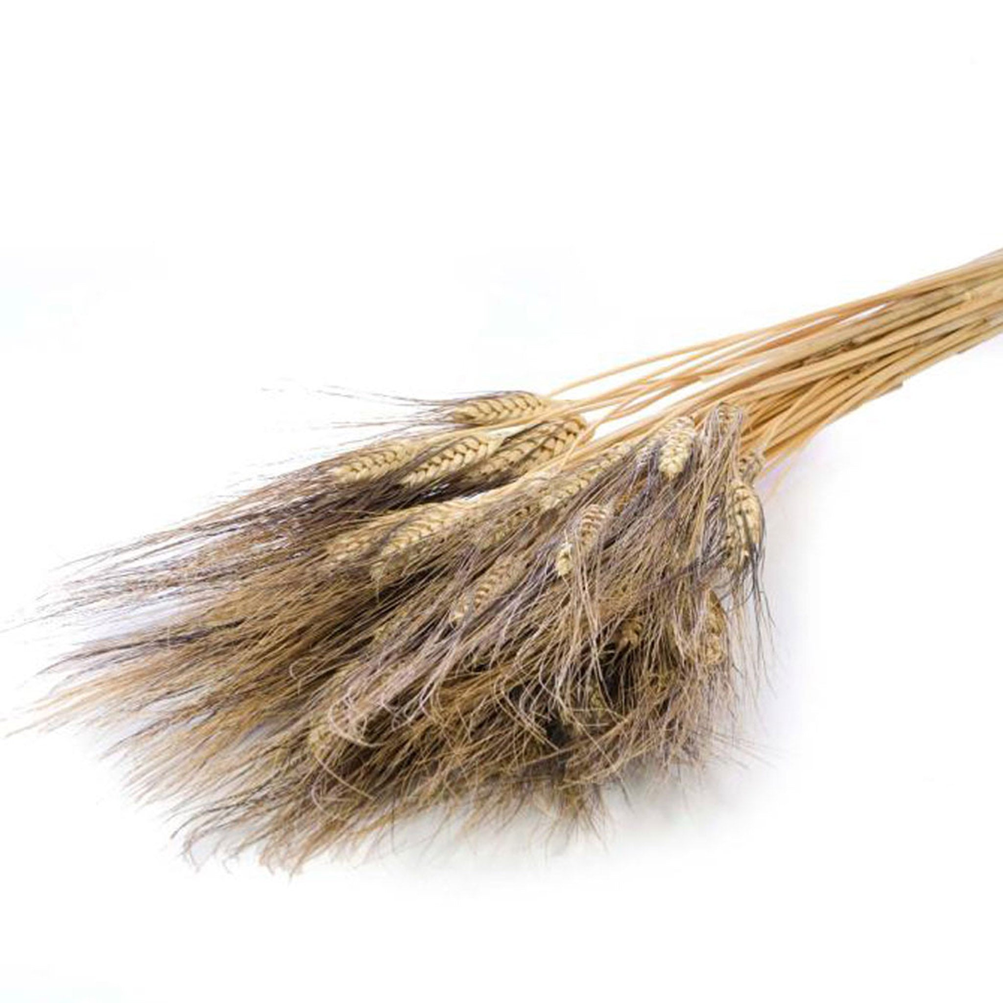 Dried Triticum 'Black Wisps' Natural Grass Bunch - Five And Dime