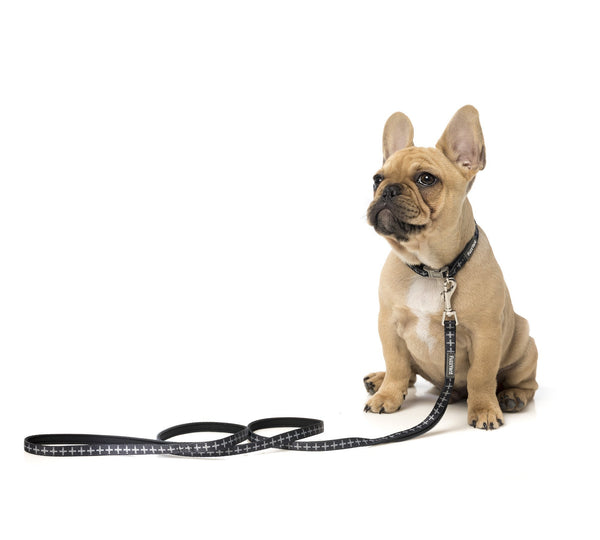 'Yeezy' Dog Lead (Puppy) - Five And Dime