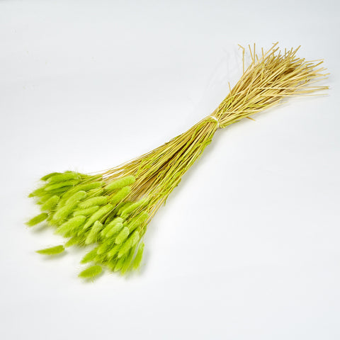 Dried Flowers - Green Bunnies Tails