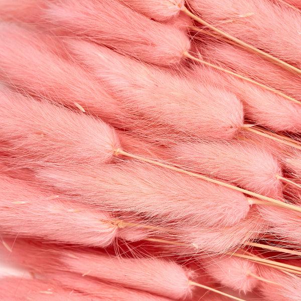 Dried Flowers - Pink Bunnies Tails