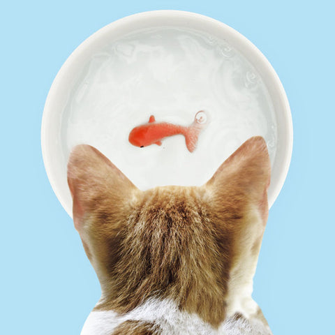3D Goldfish Pet Water Bowl - Five And Dime
