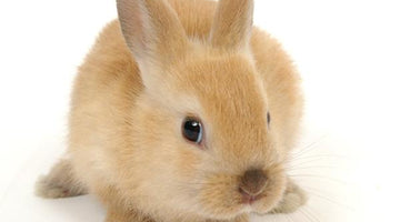 Find Cruelty-Free Personal Care Products