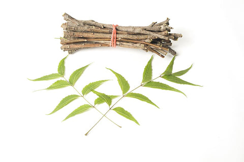 healthy aromatic leaves