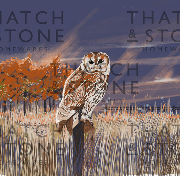 British Wildlife Illustrations - Owl