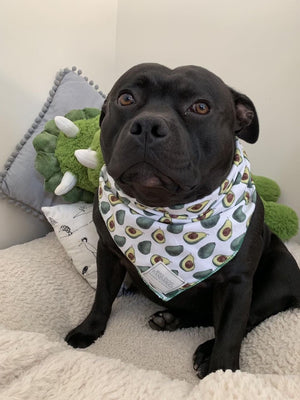 Avocado Bandana