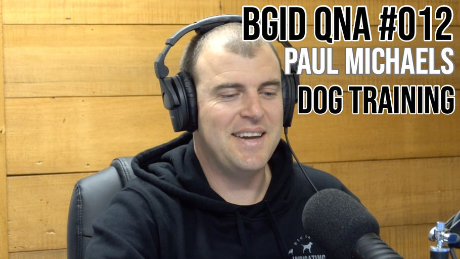 Big Game Indicating Dogs QnA #012