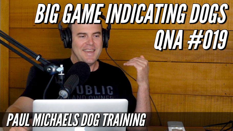 Big Game Indicating Dogs QnA #019