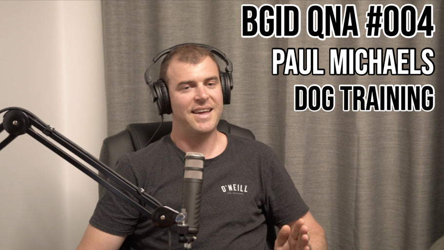 Big Game Indicating Dogs QnA #004