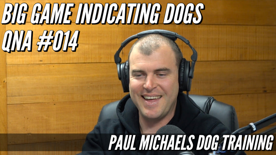 Big Game Indicating Dogs QnA #014