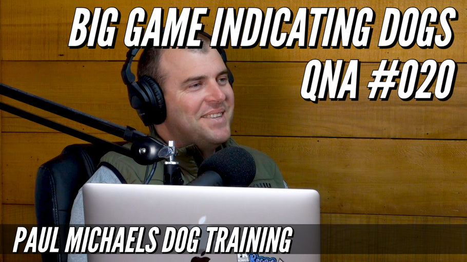 Big Game Indicating Dogs QnA #020