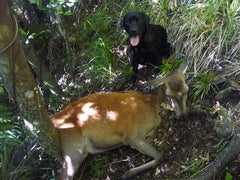 Hunting Stags With An Indicating Dog