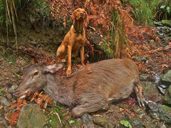 Long Range Hunting With Dogs