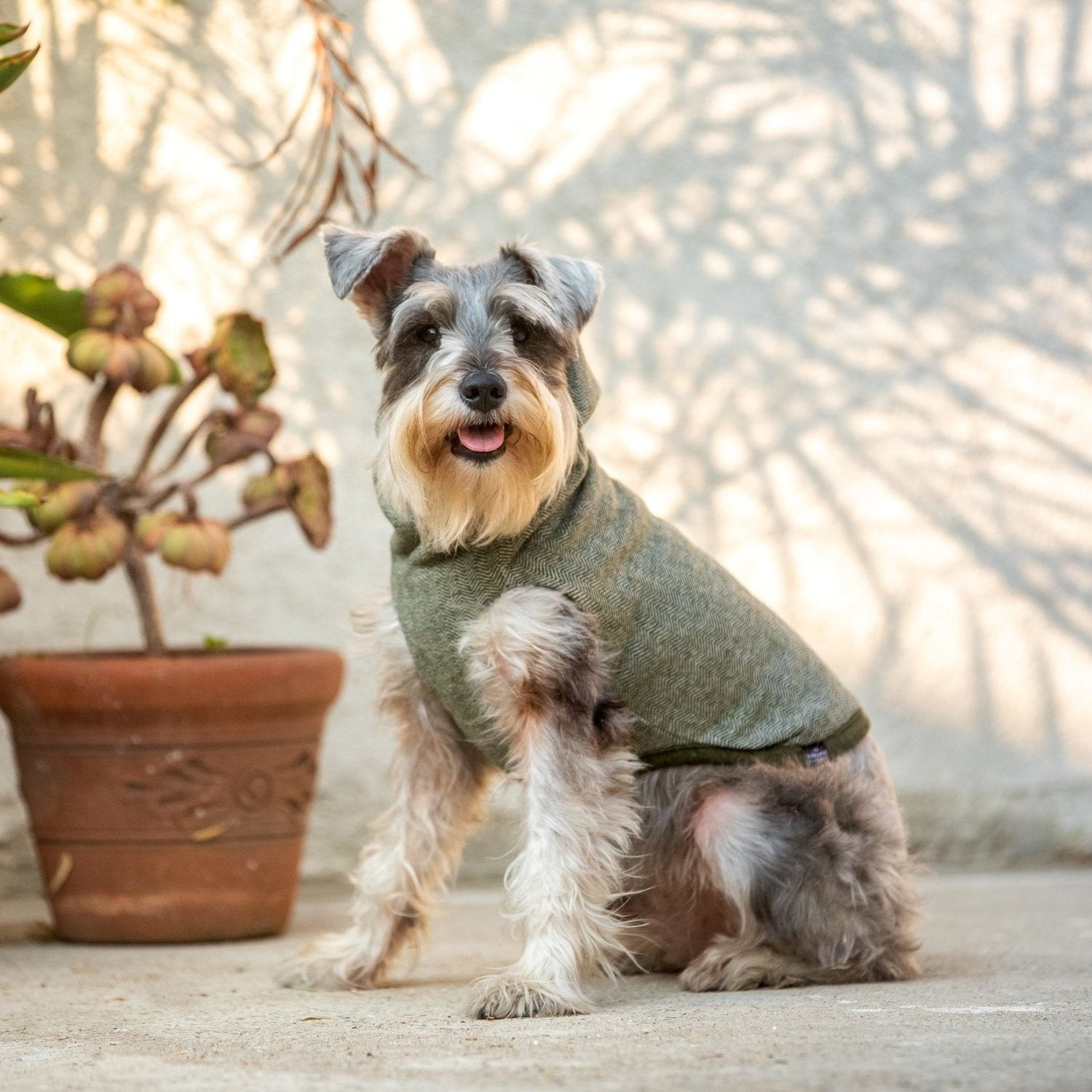 sustainable dog clothes