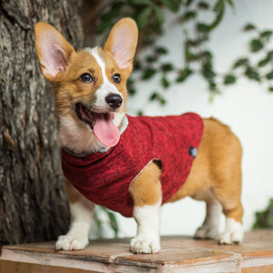Ethical Pet Clothing