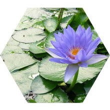 Load image into Gallery viewer, Blue Lotus Spagyric