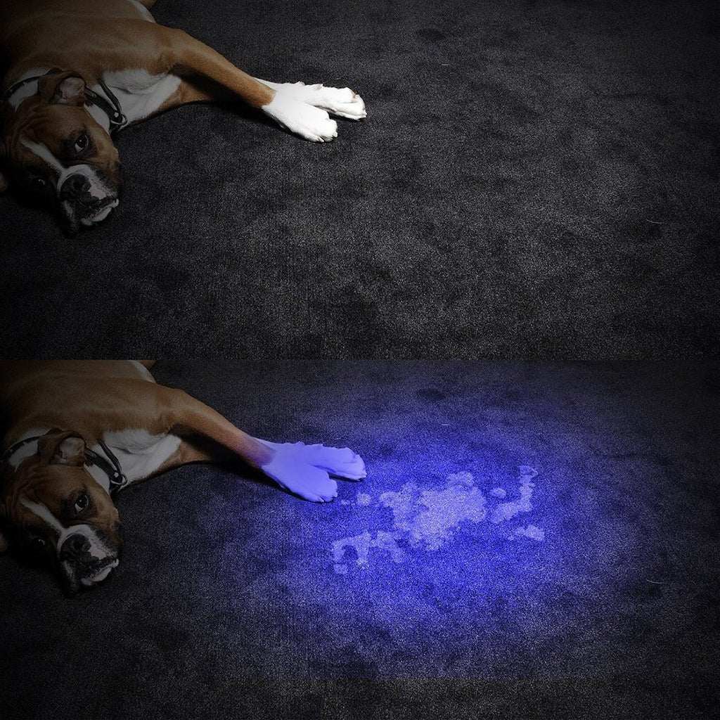 Morpilot 2 Pcs UV Handheld Flashlight 12 Led 395nm Ultraviolet Blacklight Pet Dog Cat Stain Urine Detector Light Torch, Find Stains on Carpet, Rugs, Clothes or Bed, Catch Scorpion, Hotel Inspection