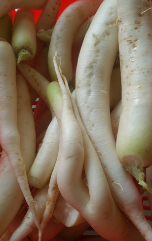 A Blessing in Disguise-Daikon Radish