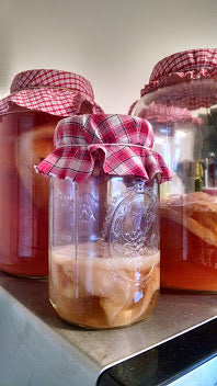 Kombucha Fermented Probiotic Tea Scoby Mother with Starter Tea Gallon Sized