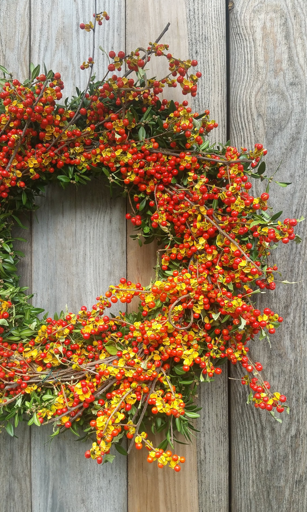 Dried Bittersweet Vine Wreath: All Natural from Nature