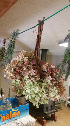 Dried Hydrangea stems- Various shades-set of 1 to 3