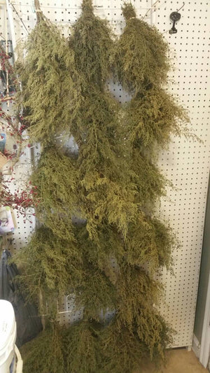 Dried Bunch Bundle Sweet Annie/Sweet Wormwood (Artemisia annua)*Primitive Home Decor