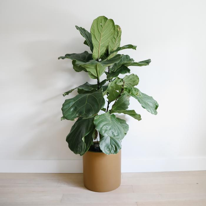Hudson + Oak Cylinder Planter Camel Rose City Goods Lightweight Indoor Outdoor Planter Ethically Made with Custom Fiberglass Compound Hand Painted in Vancouver BC
