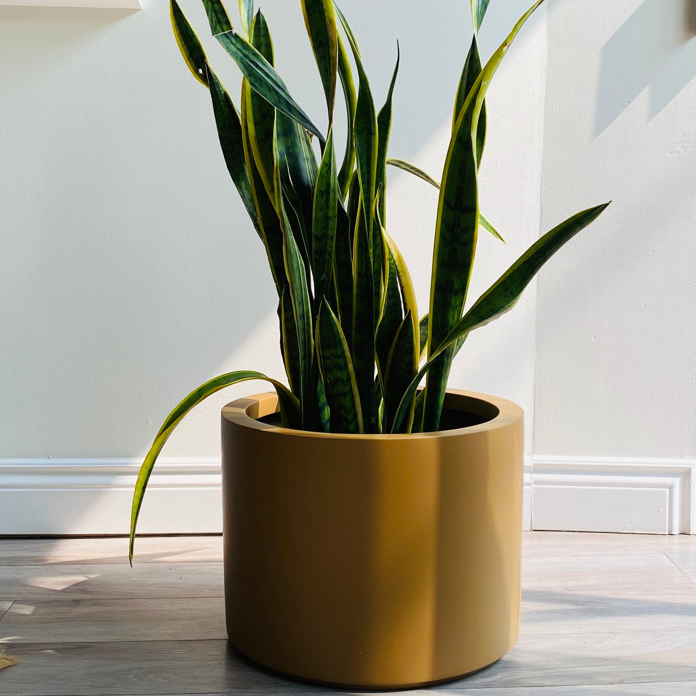 Low Cylinder Planter // Camel