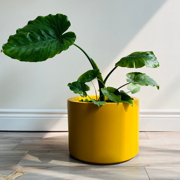 Low Cylinder Planter // Hunny Mustard