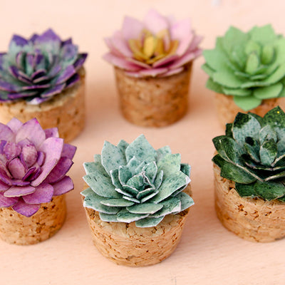 Succulent - Succulent Patio, 6pcs