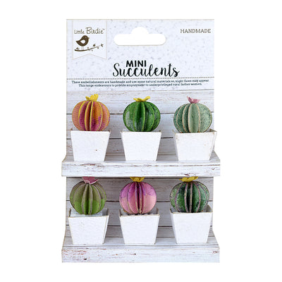 Barrel Cactus - Assorted Colours, 6pcs