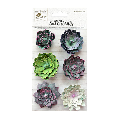 Succulent Galore 6pc