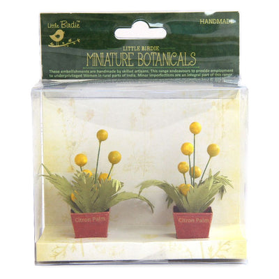 Miniature Botanical Citron Palm 2pcs